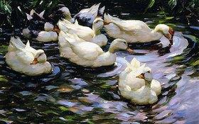 Alexander Koester: Enten auf einem sonnenbeschienenen See