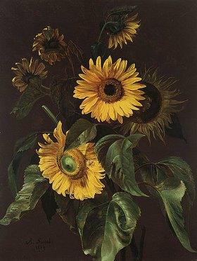 Louis-Apollinaire Sicard: Sonnenblumen