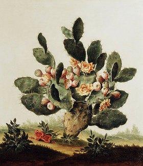 Albert van der Eeckhout: Ein Kaktus