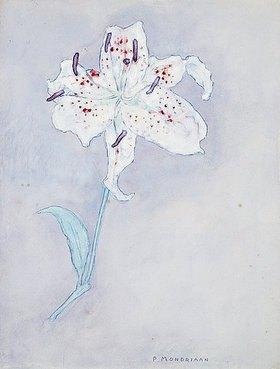 Piet Mondrian: Lilie