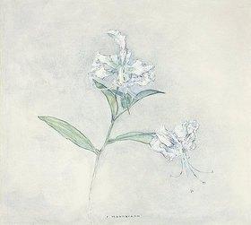 Piet Mondrian: Zwei japanische Lilien (Deux Lilies Japonaises)