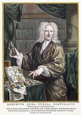 Jacobus Houbraken: Porträt von Albertus Seba, Herausgeber von 'Locupletissimi Rerum Naturalium Thesauri Accurata Descriptio [...]'. Amsterdam