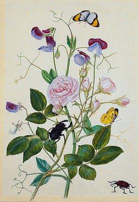 Thomas Robins Jr: Rosa gallica und Staudenwicke, Rüsselkäfer, Hirschkäfer und Schmetterlinge