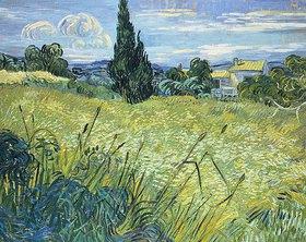 Vincent van Gogh: Grünes Weizenfeld mit Zypresse