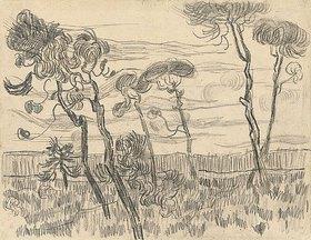 Vincent van Gogh: Sechs Pinien nahe der Einzäunung