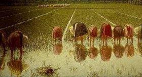 Alessandro Morbelli: Für achtzig Cents (Arbeit im Reisfeld)