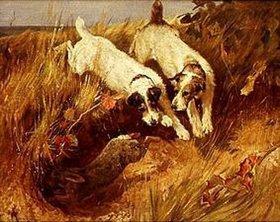 Arthur Wardle: Zwei Foxterrier jagen ein Wildkaninchen