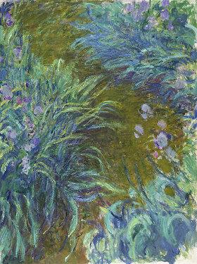 Claude Monet: Schwertlilien