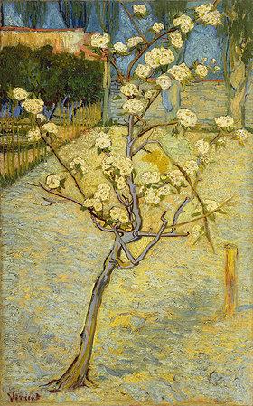 Vincent van Gogh: Kleiner blühender Birnbaum. Arles, April