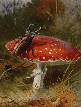 Archibald Thorburn: Ein Hirschkäfer auf einem Giftpilz
