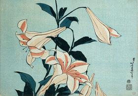Katsushika Hokusai: Lilien