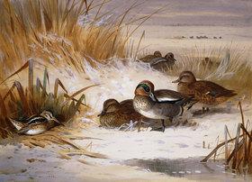 Archibald Thorburn: Mallard-Enten und Schnepfen im Winter