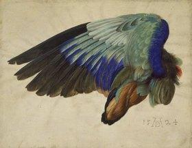 Albrecht Dürer: Flügel eines Vogels