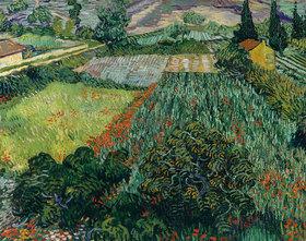 Vincent van Gogh: Mohnfeld und Felder
