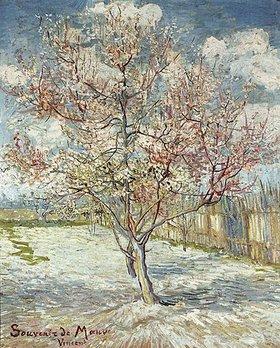 Vincent van Gogh: Blühende Pfirsichbäume (Souvenir de Mauve)