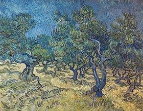 Vincent van Gogh: Olivenbäume (Les Oiliviers)