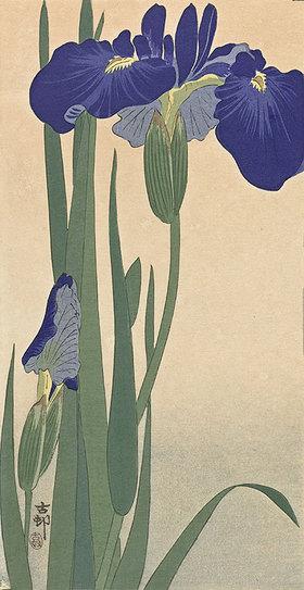 Ohara Shôson: Blaue Lilien
