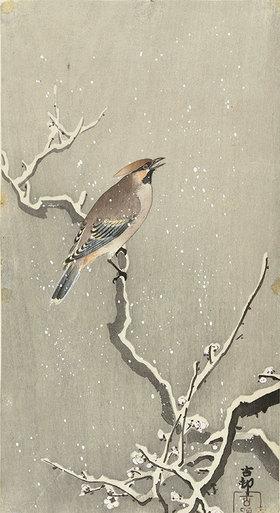 Ohara Shôson: Seidenschwanz auf einem verschneiten Ast