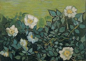 Vincent van Gogh: Wildrosen