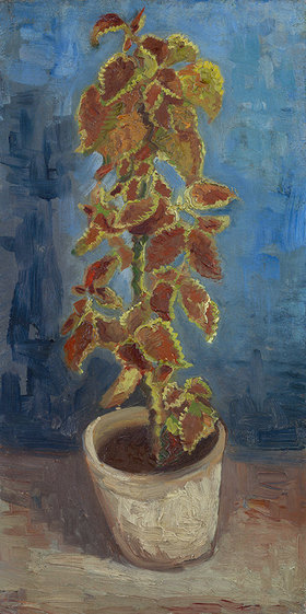 Vincent van Gogh: Blumentopf mit Buntnessel