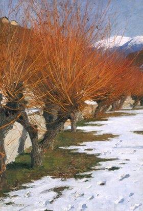 Alexander Koester: Weiden in der Wintersonne