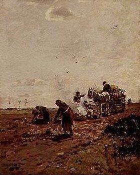 Hugo Mühlig: Kartoffellese
