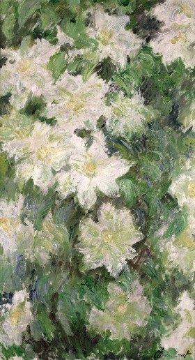 Claude Monet: White Clematis