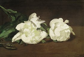 Edouard Manet: Zweig weißer Pfingstrosen