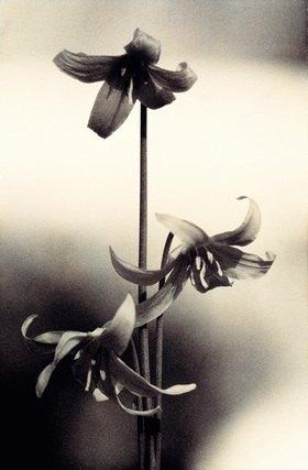 Christoph Hellhake: Blumentanz