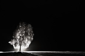 Christoph Hellhake: Baumfeen