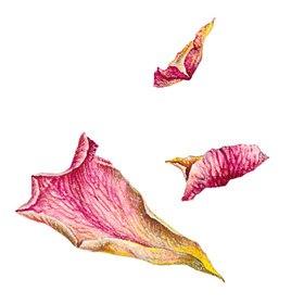 Christina Kraus: Rosen Blütenblätter