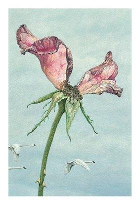 Christina Kraus: Rose und Schwäne