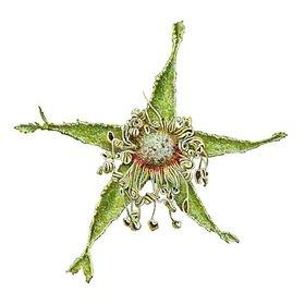 Christina Kraus: Verblühte Rose (Pentagramm)