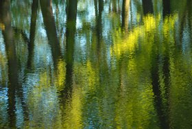 Günter Kozeny: Bäume spiegeln sich im Wasser
