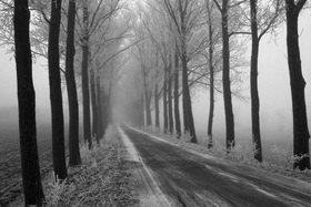 Günter Kozeny: Winterliche Allee