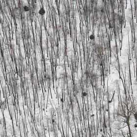 Günter Kozeny: Winterlicher Laubwald