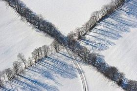 Günter Kozeny: Baum-Kreuzung