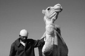 Günter Kozeny: Marokko; Weißes Kamel