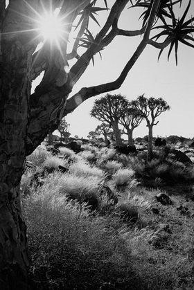 Günter Kozeny: Namibia