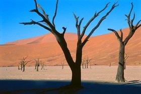 Günter Kozeny: Namibia, Namib-Wüste: Sossusvlei
