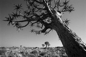 Günter Kozeny: Namibia; Im Köcherbaumwald, Keetmanshoop