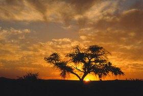 Günter Kozeny: Namibia; Sonnenuntergang im Busch