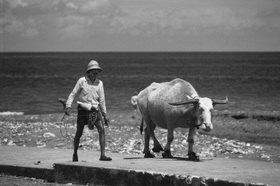 Günter Kozeny: Indonesien; Bali; Mann mit Büffel