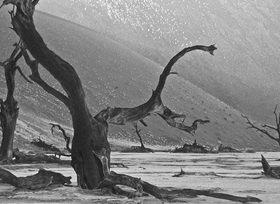 Günter Kozeny: Namibia; Namib-Naukluft Park: Sossusvlei