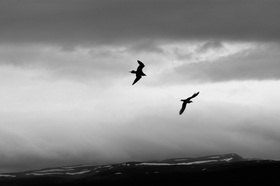 Günter Kozeny: Island; Möven