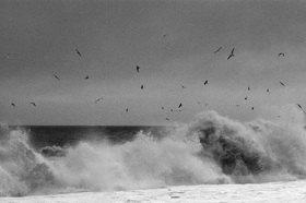 Günter Kozeny: Island; Seevögel in der Brandung