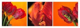 Günter Kozeny: Floreale Form: Papageientulpen
