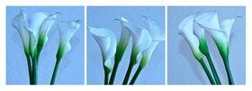Günter Kozeny: Florale Form: CALLA, kühl