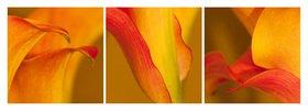 Günter Kozeny: Floreale Form: CALLA in gelborange