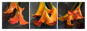 Günter Kozeny: Floreale Form: CALLA, gelborange